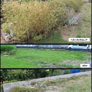 ロココの庭は夏庭に変身中!
