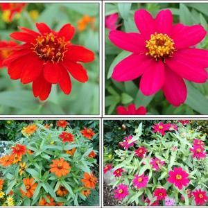 庭便り:秋色ガーデン
