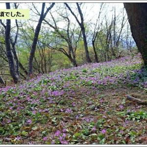 斐太歴史の里は花盛り(10日オープンです)