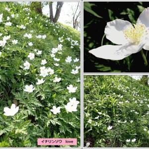 春はウキウキ・・・山菜の季節到来!