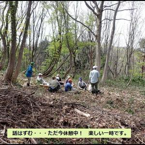 里山保全クラブ③ 樹の花も美しい❤