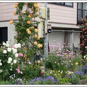 6月ですが・・・(5月の庭 ⑥)ジキタリスのある風景