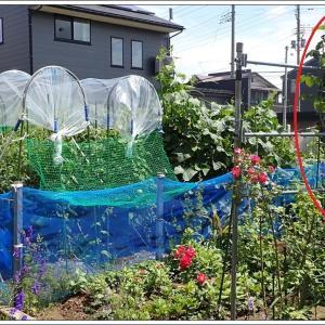 庭便り7月 ② 菜園&空地ガーデン草刈り