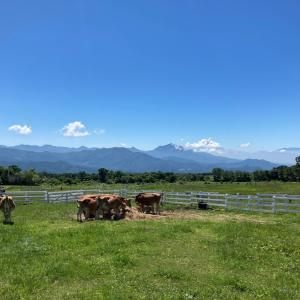 山梨県と長野県の境あたりをぶらぶらと。