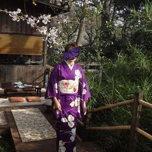 皆さんの装い カタバミの柄に桜の刺繍帯