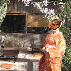 皆さんのコーデ 煉瓦色の桜に牡丹の着物