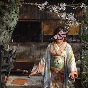皆さんのコーデ サーモンピンク色の桜の着物にトランプとシガレットの帯