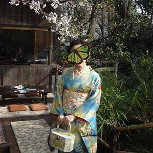 皆さんのコーデ 桜に蝶や小鳥の着物と桜と藤の刺繍帯