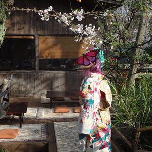 皆さんのコーデ 古典ポップな小紋に流水に桜の帯