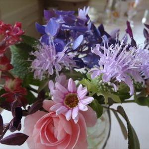 夏の花が咲き始めました。ベルガモットとアキレア