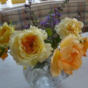 夏に咲く黄色系の薔薇