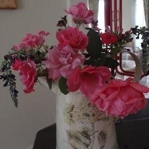 ピンク系の薔薇が咲いてきました。