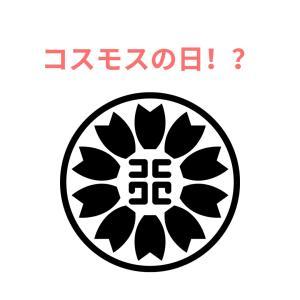 【雑記】コスモスを見たら行政書士を思い出して!
