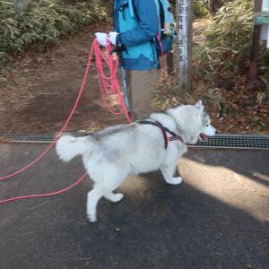 犬生最大の冒険の始まり〜♪