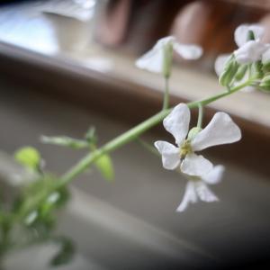 白い花が咲いた♪