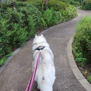 いつもの散歩で