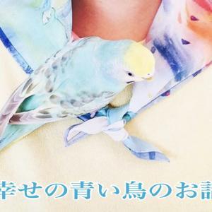 幸せの青い鳥のお話 (前編)