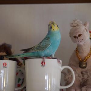幸せの青い鳥のお話 (後編)