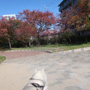 近所の公園で し、しまった〜