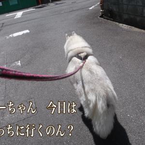 今日の散歩のコースは?
