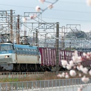 EF66(105号機)~桜と75レ