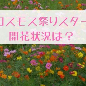初めての三光コスモス園10/14時点での開花状況は【まだまだ】