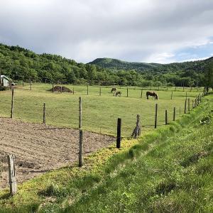 北海道紋別郡遠軽町の?牧場で馬を撮る