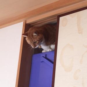 土曜日の恋猫!