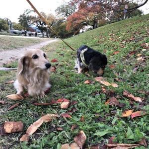 愛犬と共に「鴨川」へ
