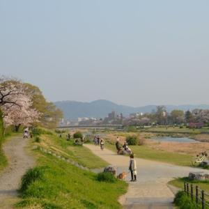 賀茂川から疏水あたりを散歩