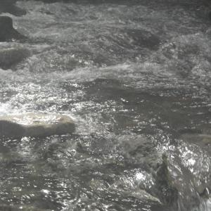 山梨の渓流&河口湖釣行
