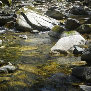 山梨の渓流&忍野釣行