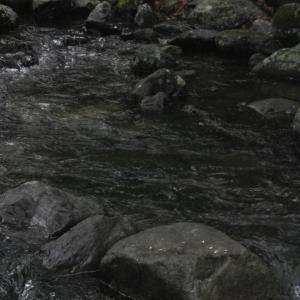 H川&忍野釣行