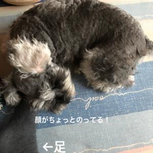 きゃ(´∀`)