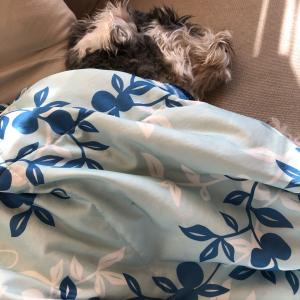 布団をかけて寝る