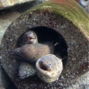6月の江ノ島水族館