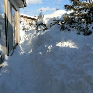 今年は大雪。三連休の思い出。