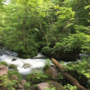 奥入瀬渓流で森林浴。