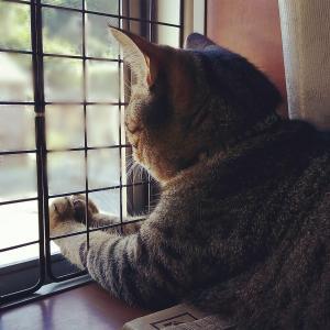 愛猫 VS 動物病院~そろそろ慣れてくれないかな編~
