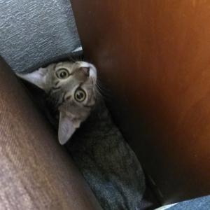 我が家の猫の大騒動