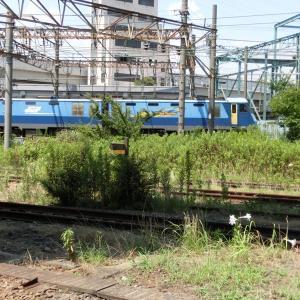 H30.08休日おでかけパス_08─踏切:田島とJR貨物 浜川崎駅。