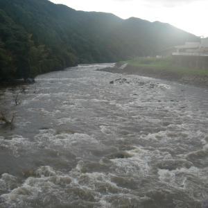 昨夜、芦ノ湖・湖尻水門が事前放流した、その前にイノシシの親子…!?