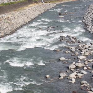 川が落ち着くにつれ、鳥や人も戻ってきた…?!