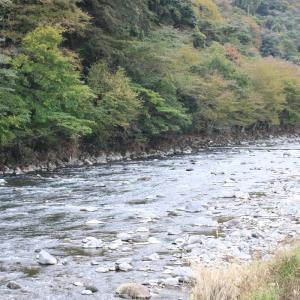 川にも紅葉が映えてきた…!!