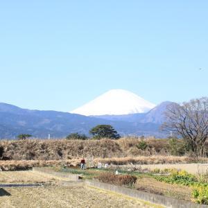 今日は、富士山が雲もなく…!!