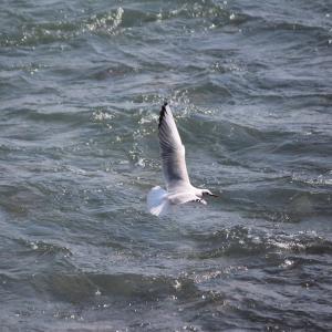酒匂川では、追星のある鮎まで見えるようだ…!?