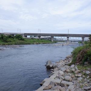 昼から良型揃いで12尾、太閤橋上流…!!