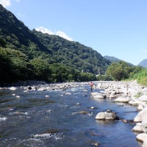 狩野川も酒匂川も釣れない、という高校同期の友人を案内し太閤橋上流部に…!!