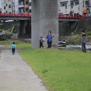 早川で今日見た鳥…!!