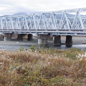 酒匂川JR鉄橋下で、落ち鮎の群れか?!